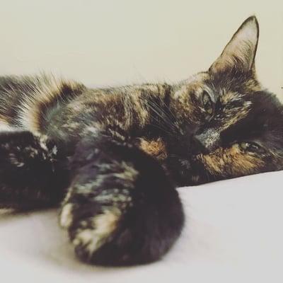 cat named muffin